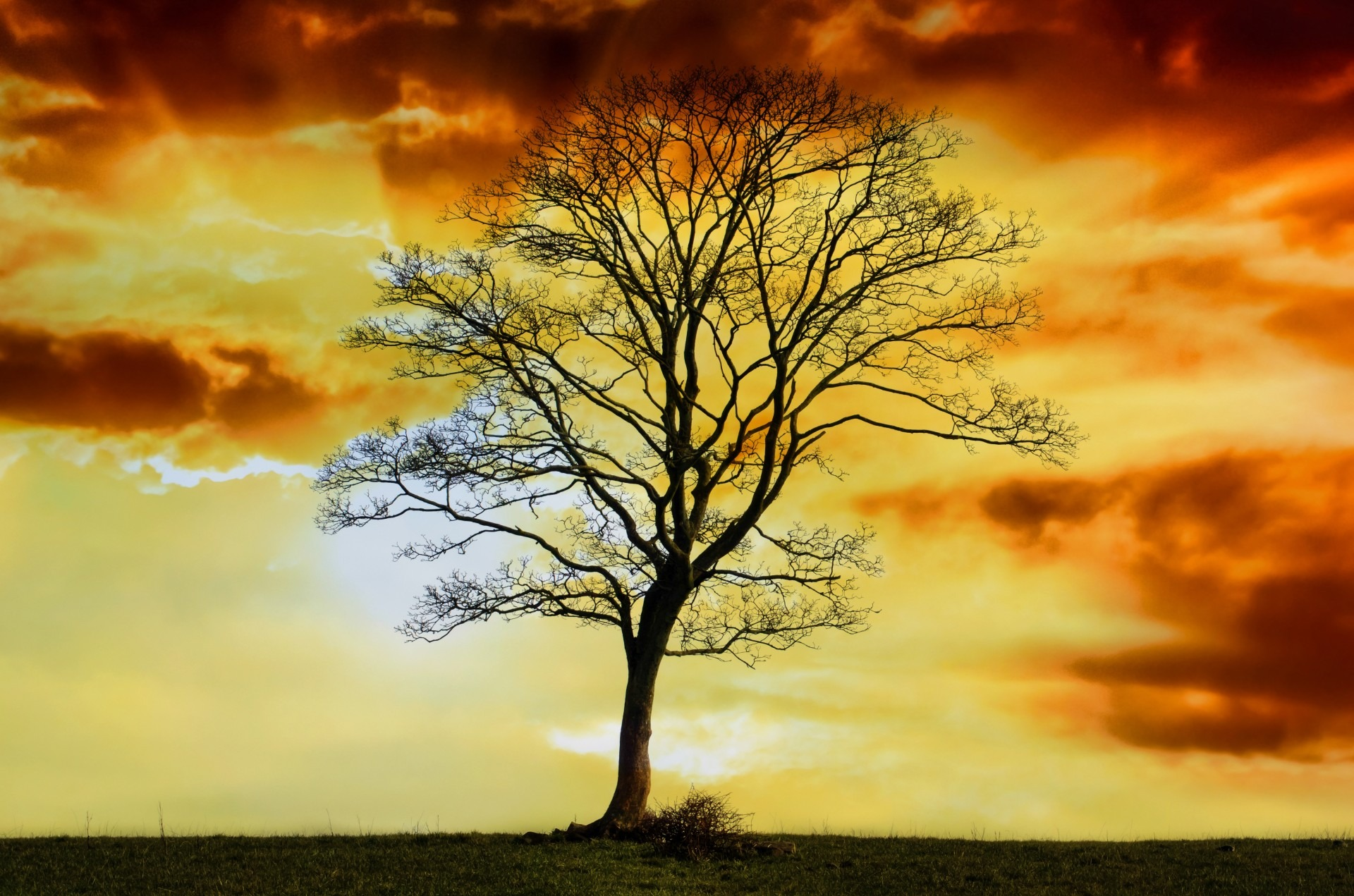 tree-219714